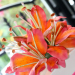 Asiatic lillies fuschia coral wedding cake